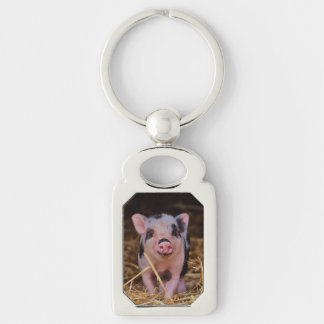 Chaveiro mini porco