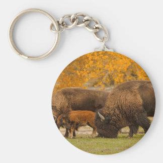 Chaveiro Nação da família do bisonte