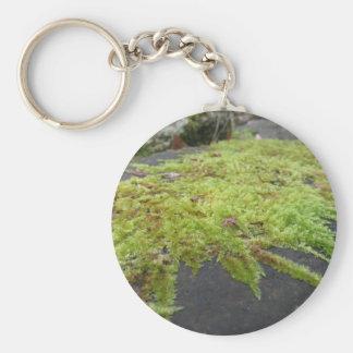 Chaveiro O musgo verde no detalhe da natureza de musgo