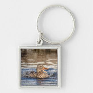 Chaveiro Pato do pato selvagem no parque tragando