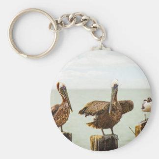 Chaveiro Pelicanos empoleirados em cargos