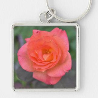 Chaveiro Planta cor-de-rosa da flor da fotografia da