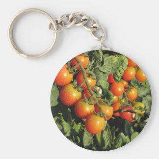 Chaveiro Plantas de tomate que crescem no jardim