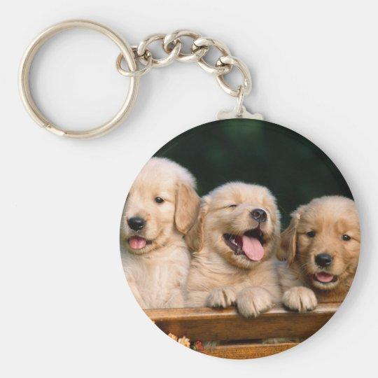 Chaveiro puppies