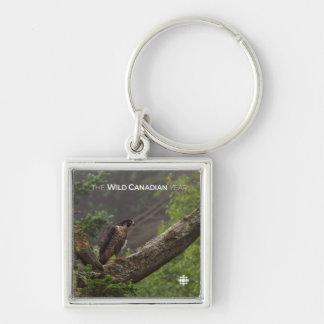 Chaveiro Queda - falcão de peregrino