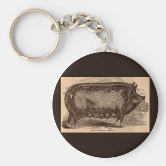 Chaveiro Raça do século XIX da porca de Berkshire do