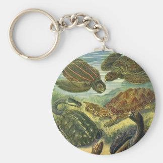 Chaveiro Tartaruga da terra das tartarugas de mar do