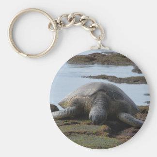 Chaveiro Tartaruga que descansa nas rochas