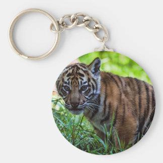 Chaveiro Tigre Cub de Sumatran dos alugueres