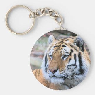 Chaveiro Tigre de Bengal real estóico dos alugueres