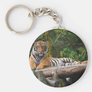 Chaveiro Tigre do Malay dos alugueres que Lounging no