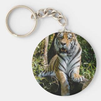 Chaveiro Tigre dos alugueres em Muenster