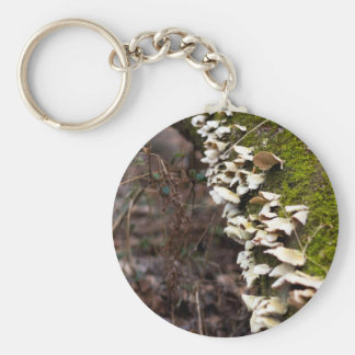 Chaveiro tree_moss_winter mushroom_downed