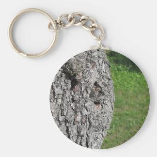 Chaveiro Tronco de árvore da pera contra o fundo verde