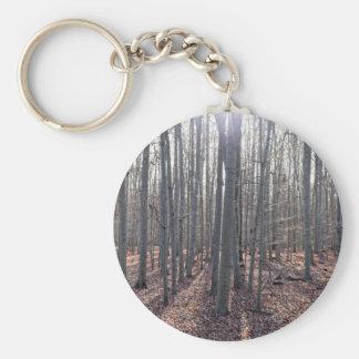 Chaveiro Uma floresta da faia na queda