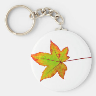 Chaveiro Uma folha de bordo colorida no outono no branco