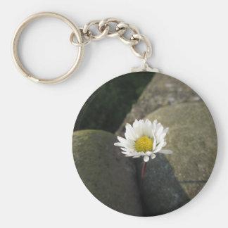 Chaveiro Única flor da margarida branca entre as pedras