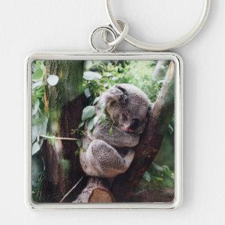 Chaveiro Urso de Koala bonito que relaxa em uma árvore