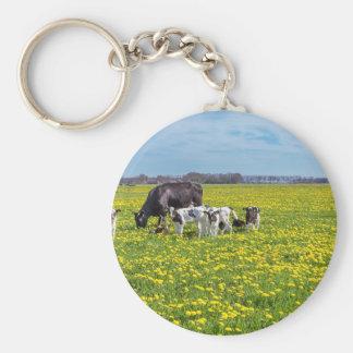 Chaveiro Vaca com as vitelas que pastam no prado com