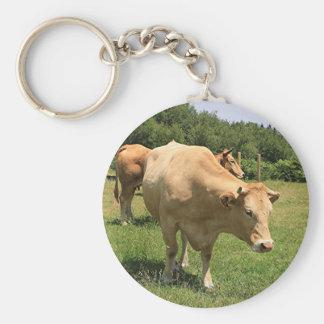 Chaveiro Vacas no campo, EL Camino, espanha 2