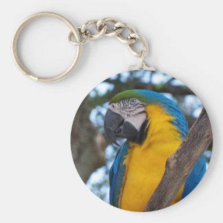 Chaveiro Verde amarelo e Macaw tropical azul