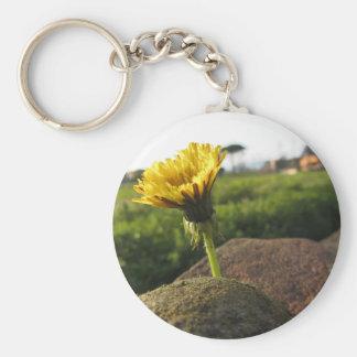 Chaveiro Wildflower amarelo que cresce em pedras no por do