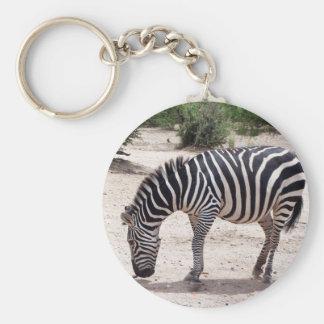 Chaveiro Zebra africana no jardim zoológico
