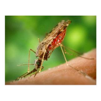 Cheio do mosquito do cartão do sangue