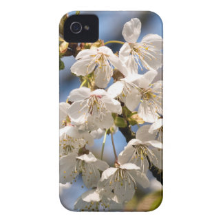 Cherry whites de OM de mero Capinha iPhone 4