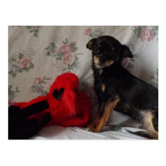 chihuahua com seu cartão do brinquedo