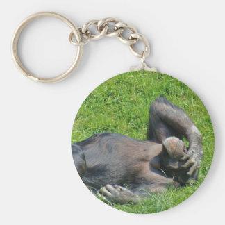 Chimpanzé de relaxamento na grama - chaveiro