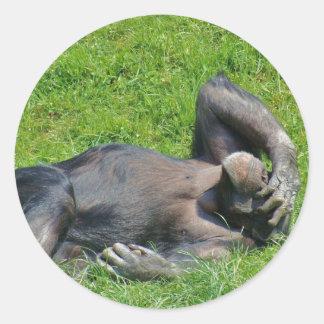 Chimpanzé - etiqueta