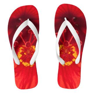 Chinelos A foto macro do hibiscus vermelho floresce em