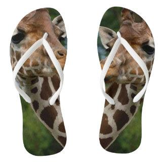 Chinelos Amantes do girafa
