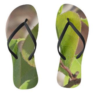 Chinelos as gotas de orvalho alinharam em uma folha da