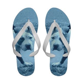 Chinelos azuis de Pitbull
