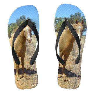 Chinelos Beleza do cavalo do Palomino,
