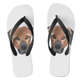 Chinelos Cão Brown Labrador da ilustração