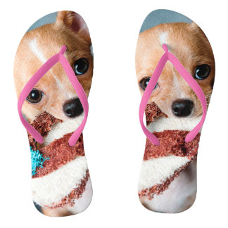 Chinelos chihuahua flip flops