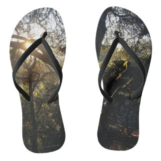 Chinelos claros da floresta