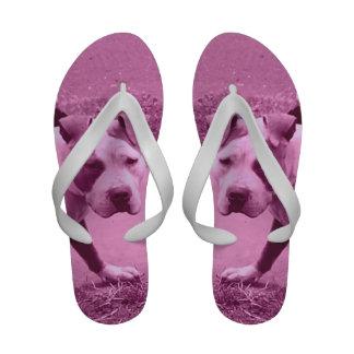 Chinelos cor-de-rosa de Pitbull