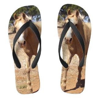 Chinelos Cumprimento do cavalo do Palomino,