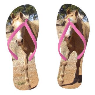Chinelos Cumprimento do cavalo do Palomino, rosa das