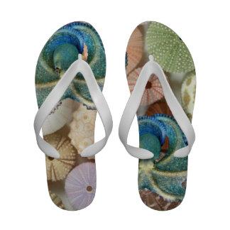 Chinelos do polvo e do Seashell