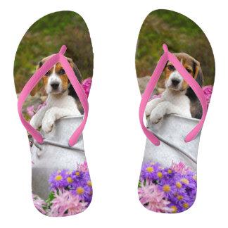 Chinelos Filhote de cachorro Tricolor bonito do cão do