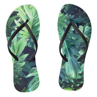 Chinelos Folhas tropicais da floresta húmida