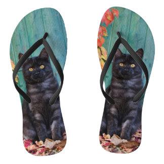Chinelos Gatinho bonito do gato preto com a foto azul da