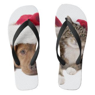 Chinelos Gatos e cães - gato do Natal - cão do Natal
