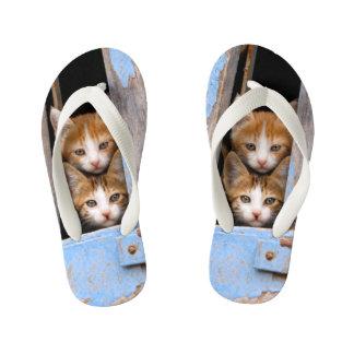 Chinelos Infantis Gatinhos bonitos do gato em miúdos azuis da foto