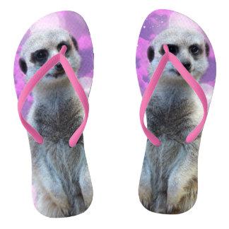 Chinelos Meerkat com rosa das senhoras da faísca